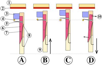 mecanismo del Clavicordio